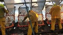 La pêche à la coquille Saint-Jacques au matin