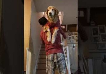 Spoiled Dogs Insist Owner Carries Them Upstairs to Bed