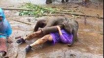 Un éléphanteau montre beaucoup trop d'amour à cette femme