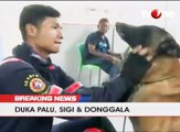 Lima Hari Pasca Gempa Palu, Anjing Pelacak Mulai Diterjunkan