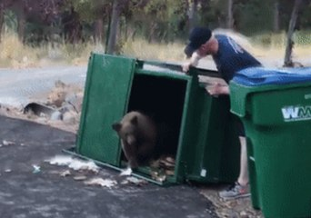 'This Trash Can is Just Right' - Reno Firefighters Find Three Bear Cubs in Dumpster