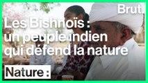Rajasthan : les Bishnoïs protègent la nature depuis des siècles
