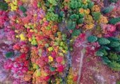 'Unbe-leaf-able' Drone Footage Shows Fall Colors in Northern Utah