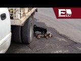 Perro intenta revivir a su amigo tras ser atropellado  / Andrea Newman