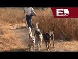 InfoDF solicita peritajes sobre el caso de los perros de Iztapalapa/ Comunidad Yazmin Jalil