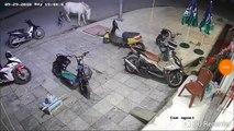Voilà pourquoi il ne faut pas laisser des enfants s'approcher à un cheval dans la rue !