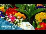 ¿Cuáles son los beneficios del baño energético de 7 flores espirituales? / Tips espirituales
