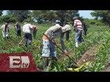 Producción y consumo de alimentos en América (Parte 2) / Análisis Global