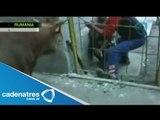 Toro ataca a un policía de tránsito de Rumania / Bull attacks a Romanian traffic police