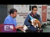 Jornadas de salud para perros y gatos en la Delegación Benito Juárez / Comunidad
