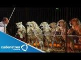 GDF publica en gaceta oficial del DF ley que prohíbe uso de animales en circos
