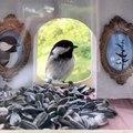 Trop mignon la maison de cet oiseau... remplie de graines !