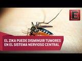 Virus del Zika puede ser usado para combatir tumores cerebrales en niños