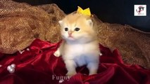 Cute Cats and Little Kittens Meowing and Talking Compilation