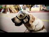 Perros rescatistas: Héroes de cuatro patas | Especial 19-S
