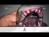Monstruos marino reales | Noticias con Yuriria Sierra