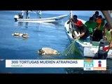 Mueren 300 tortugas atrapadas y hacen fiesta en sus nidos   Noticias con Zea