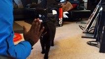 Ce chat comprend la langue des signes. Incroyable