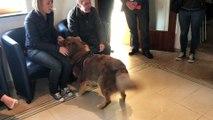 Mons: le CHU Amborise Paré organise des activités thérapeutiques avec des chiens en partenariat avec l'ASBL MABEA