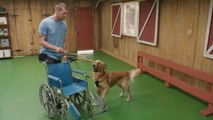 Lucky Dog - Learning a Wheelchair