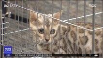 국감장 불려온 벵갈 고양이…'동물 학대' 논란
