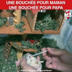 Pour guérir son hamster malade, il lui donne une gâterie après chaque médicament