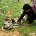 Shikoni se si këta femijë shpëtojnë qenin nga një gjarpër i madh