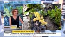 L'instant T d'Audrey DUSSUTOUR, chercheuse au CNRS