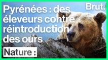 Des éleveurs français hostiles à la réintroduction de l'ours