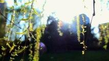 Vidéo de musique relaxante et de nature avec des phrases de Bouddha pour la méditation - Musique pour la méditation - musique inspirante