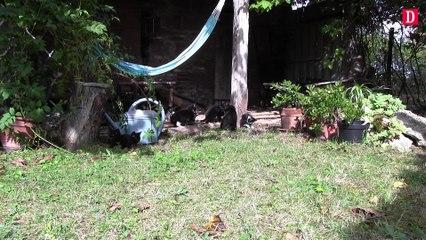 A St Nauphary, une colonie de chats squatte sa maison