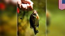 Mancing mania, tangkap dan lepas ikan berbahaya bagi ikan - TomoNews
