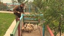 شاهد: تدريبات كلاب الشرطة البوليسية في تشيلي