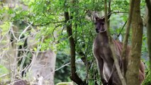 David Attenboroughs Natural Curiosities S04E06