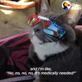 This cat gets so much attention everywhere she goes because she has to wear sunglasses — and she LOVES it