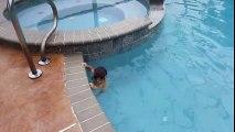 Un bébé de 12 mois nage sans l'aide de ses parents dans une piscine
