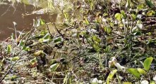 Swamp People S08 - Ep04 Vampire Gator HD Watch