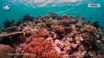 ¿Por qué son tan importantes los arrecifes de coral?