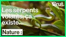 Comment les serpents volent-ils ?