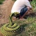 La blague d'un faux serpent attaché à la ceinture de la personne à piéger