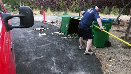 Trois oursons sauvés d'une poubelle