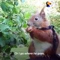 Il sauvent un écureuil et l'adopte... Animal de compagnie adorable