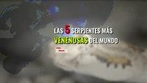 Las serpientes más venenosas del mundo