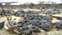 Les premières boulettes de pétrole sur des plages du Var après la collision de deux navires au large du Cap Corse