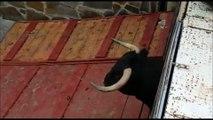 La vidéo choquante d'un taureau se cassant les pattes et s'écrasant au sol lors d'un festival