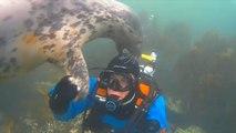 Il sub e le foche davanti alle isole