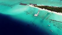 Summer Island Maldives in partnership with Reef Design Lab has designed and installed the world's largest 3-D printed reef in the Maldives, to study how corals