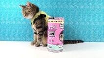 LOL Surprise Live Interactive Pet Blind Bag Toy Unboxing Review _ PSToyReviews