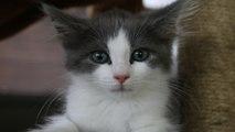 kittens, Kittens, KITTENS!!!