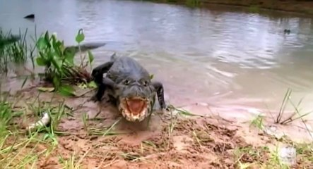 So You Think You'd Survive S01 - Ep08 Gators and Ice Tsunami HD Watch
